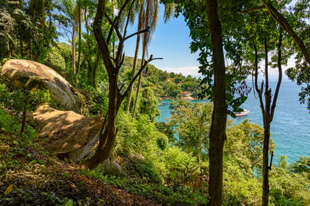 View of the sea through the branches and trees of the rain forest forest in the Green Coast of Rio de Janeiro, outdoor, nature, jungle, tourism, coastline, seascape, tropical, exotic, landscape, scenic, tropic