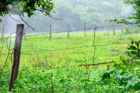 Rain falling on pasture of a brazilian farm surrounded by barbed wire