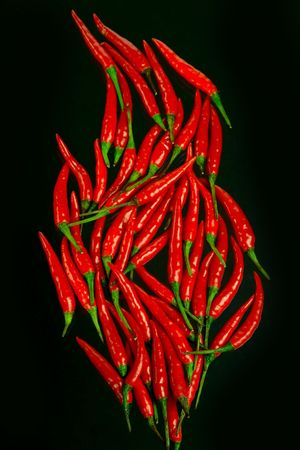 spicy plant: the flame Stock Photo