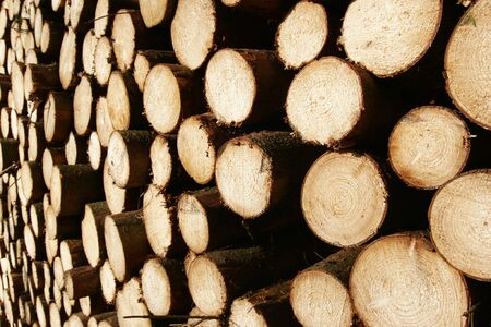 boles: stacked and sawn fir trees Stock Photo