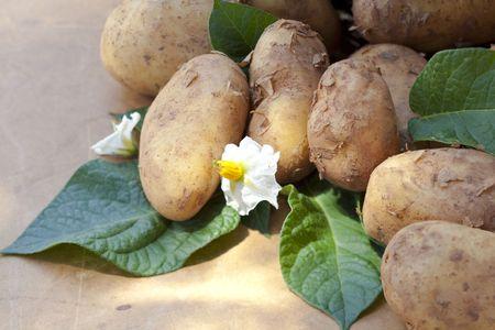 harvests: Freshly harvested potatoes