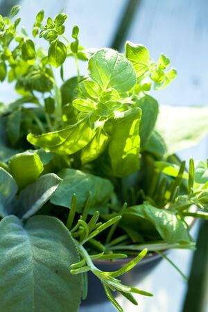 basil herb: bunch of herbs in a small bowl Stock Photo
