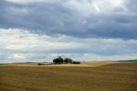 Rural landscape - little farm in the middle of wheat field. Field of gold wheat in summer sun, white clouds in blue sky.