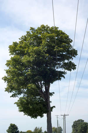 Tree, Farm Imagens