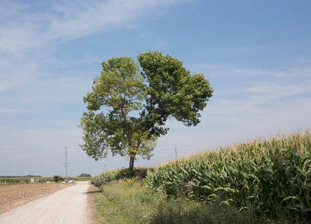Farm, Tree