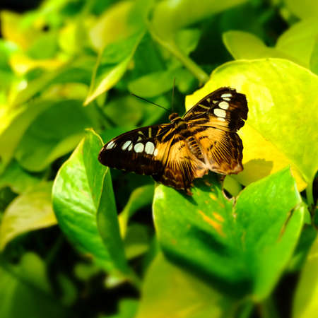 Butterfly Imagens - 43132728