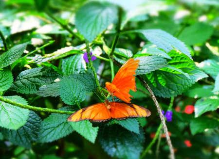 Dual Butterflies Imagens