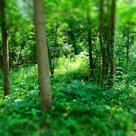 Forest Light Imagens