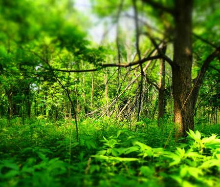 Forest Imagens - 43810146
