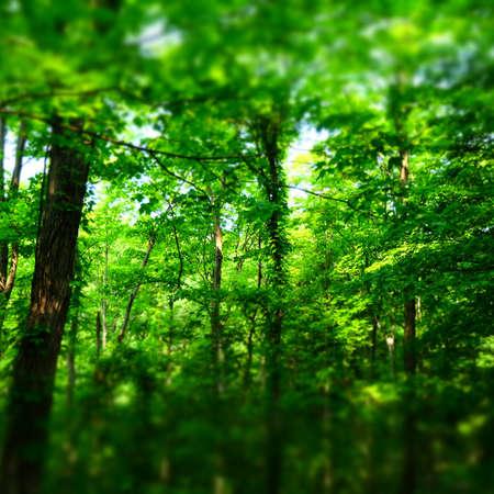 Forest Imagens - 43810147