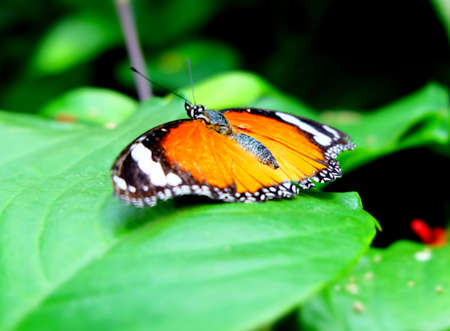Butterfly Imagens - 42846177