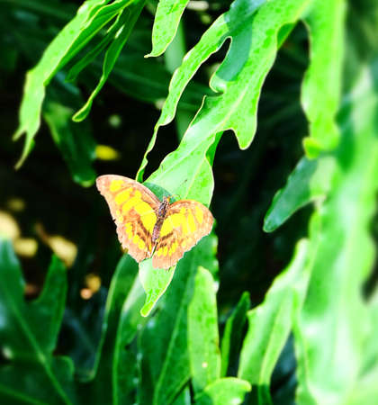 Butterfly Imagens - 42846180