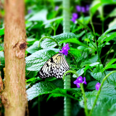 Butterfly Imagens - 42846181