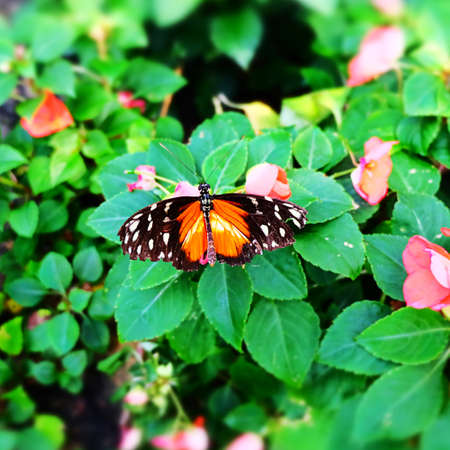 Butterfly Imagens - 42846182