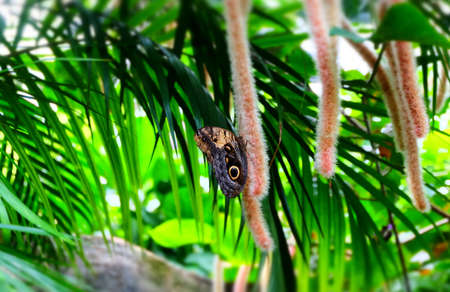 Butterfly Imagens - 42846186