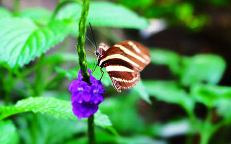 Butterfly Imagens - 42846189