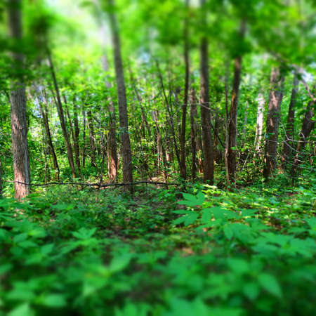 forest trail: Forest Trail