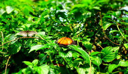 Butterfly Imagens - 42846209