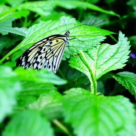 Butterfly Imagens - 42846224