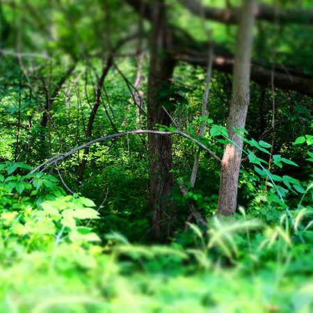 Forest Imagens - 43810148