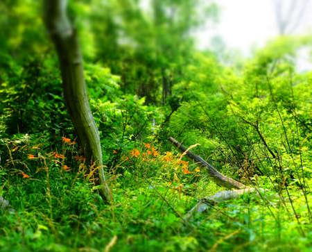 Forest Imagens - 42846232