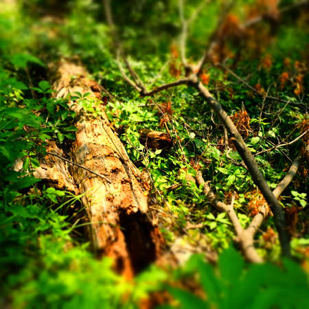 hollow tree: Hollow Tree in the Forest Stock Photo