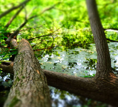 Tree growing into the Lake Imagens - 42846243