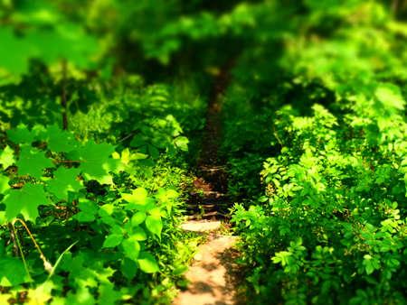 Hiking Trail Imagens - 42847850