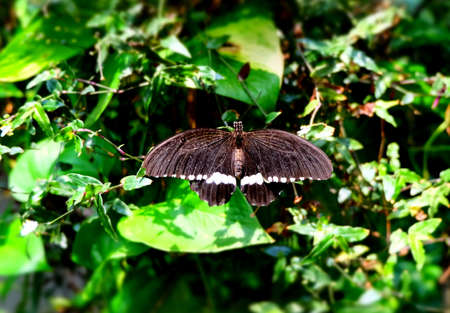 Butterfly Imagens - 42847915