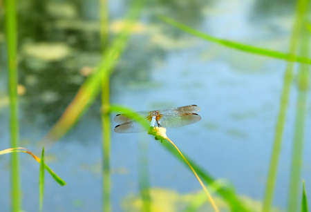 Dragon Fly Imagens - 42847921