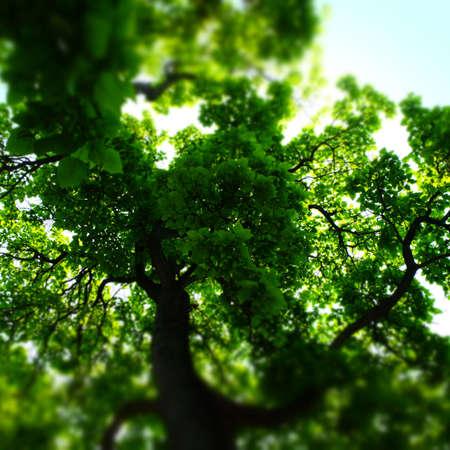 Looking up at a Tree Imagens - 42847922