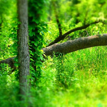 Forest Imagens - 42847924