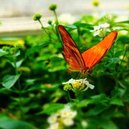 Butterfly Imagens - 42847930