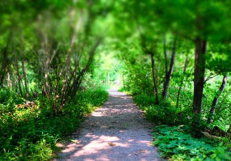 Forest Imagens - 43810150