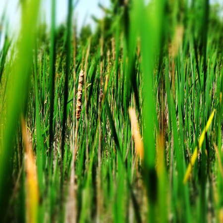Sea Grass Imagens - 43722994