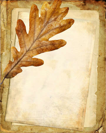 paper strip: old papers and oak leaf