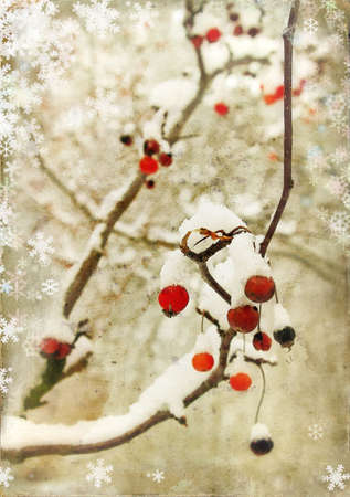 winter berry photo