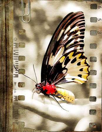 sun burnt: film strip with butterfly over old book Stock Photo