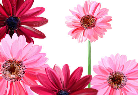 painted pink flowers photo