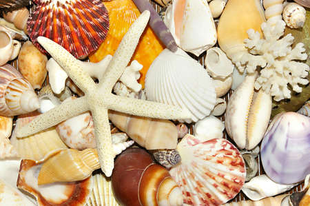 marine backgroudn form sea shells photo