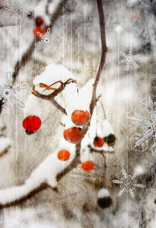 ashberry: winter berry