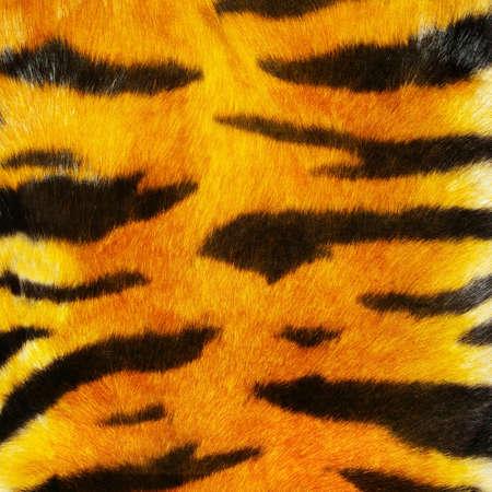 tiger fur photo
