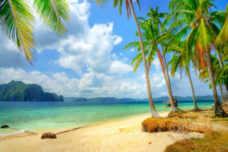 tropical paradise: tropical paradise Stock Photo