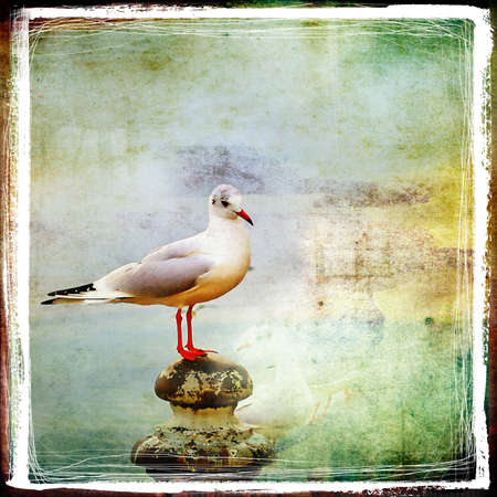denominado retro: sea gull- retro styled picture