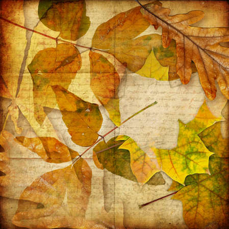 autumn paper Stock Photo - 5471601
