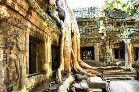 ancient temple Ta Phrom (Cambodia) photo