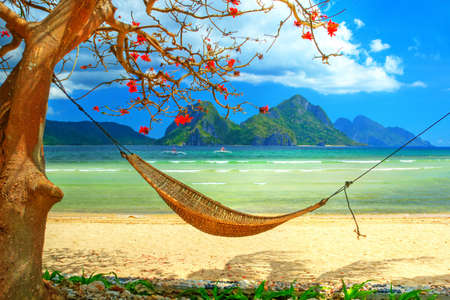 tropical beach scene with hammock