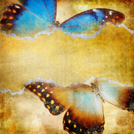 decorative retro background with butterflies  photo