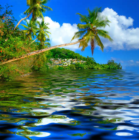 beautiful tropical background  photo