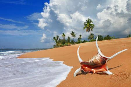 pictorial deserted beaches of Sri lanka Stock Photo - 14858319